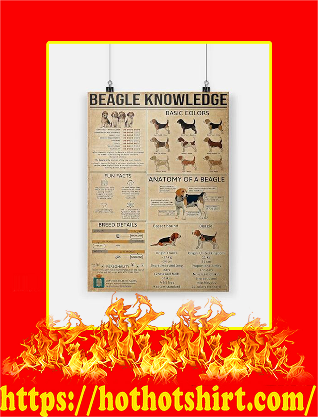 Beagle knowledge Poster - A4