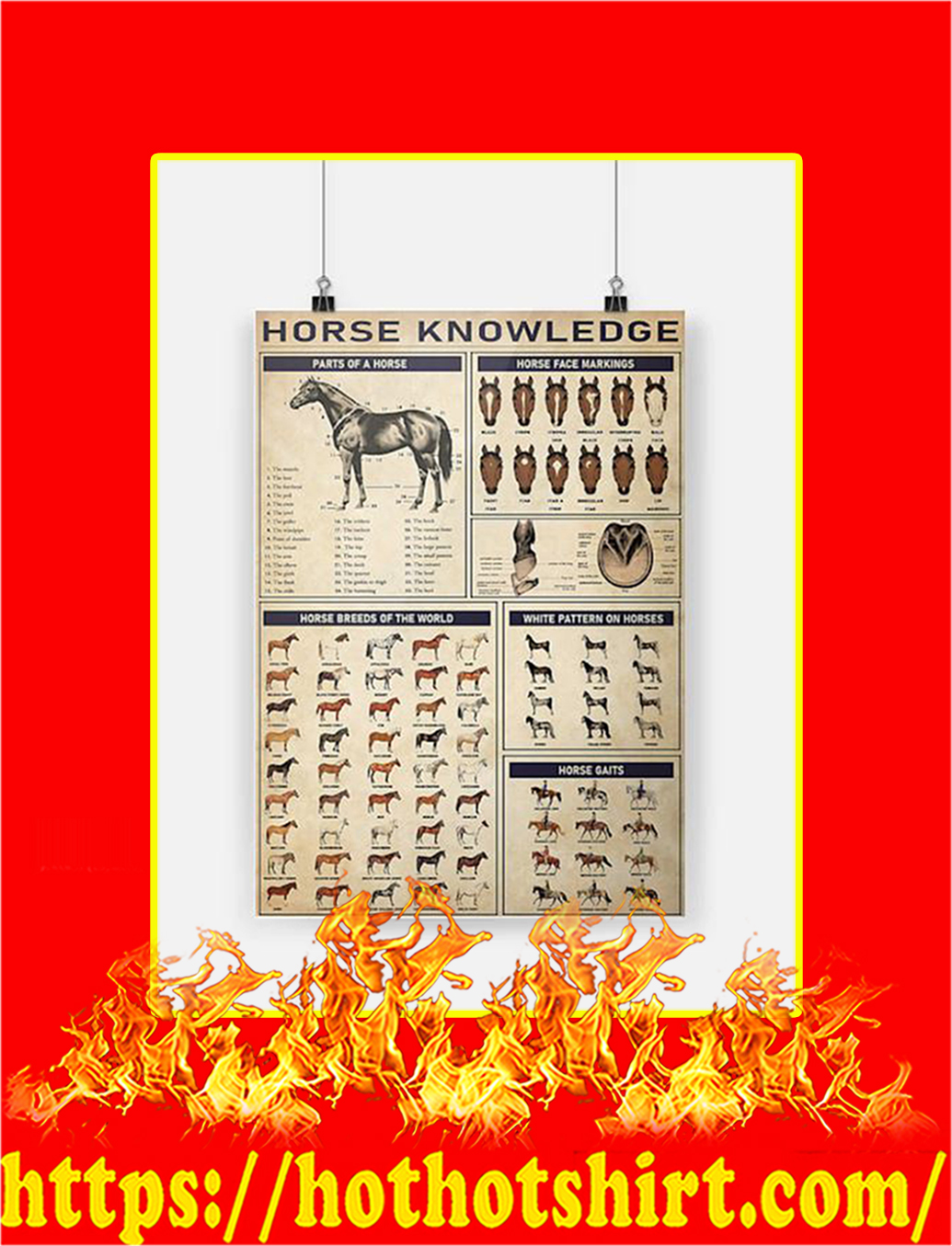 Horse knowledge Poster - A2