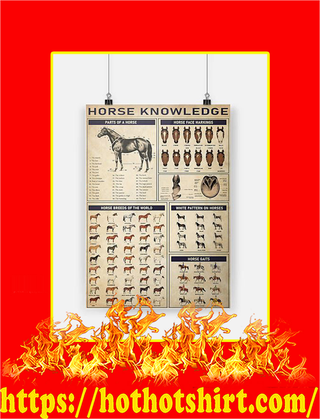 Horse knowledge Poster - A3