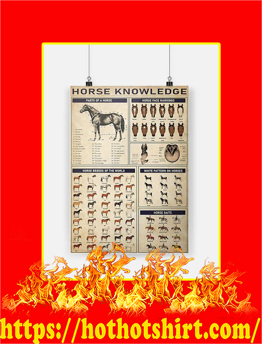 Horse knowledge Poster - A4