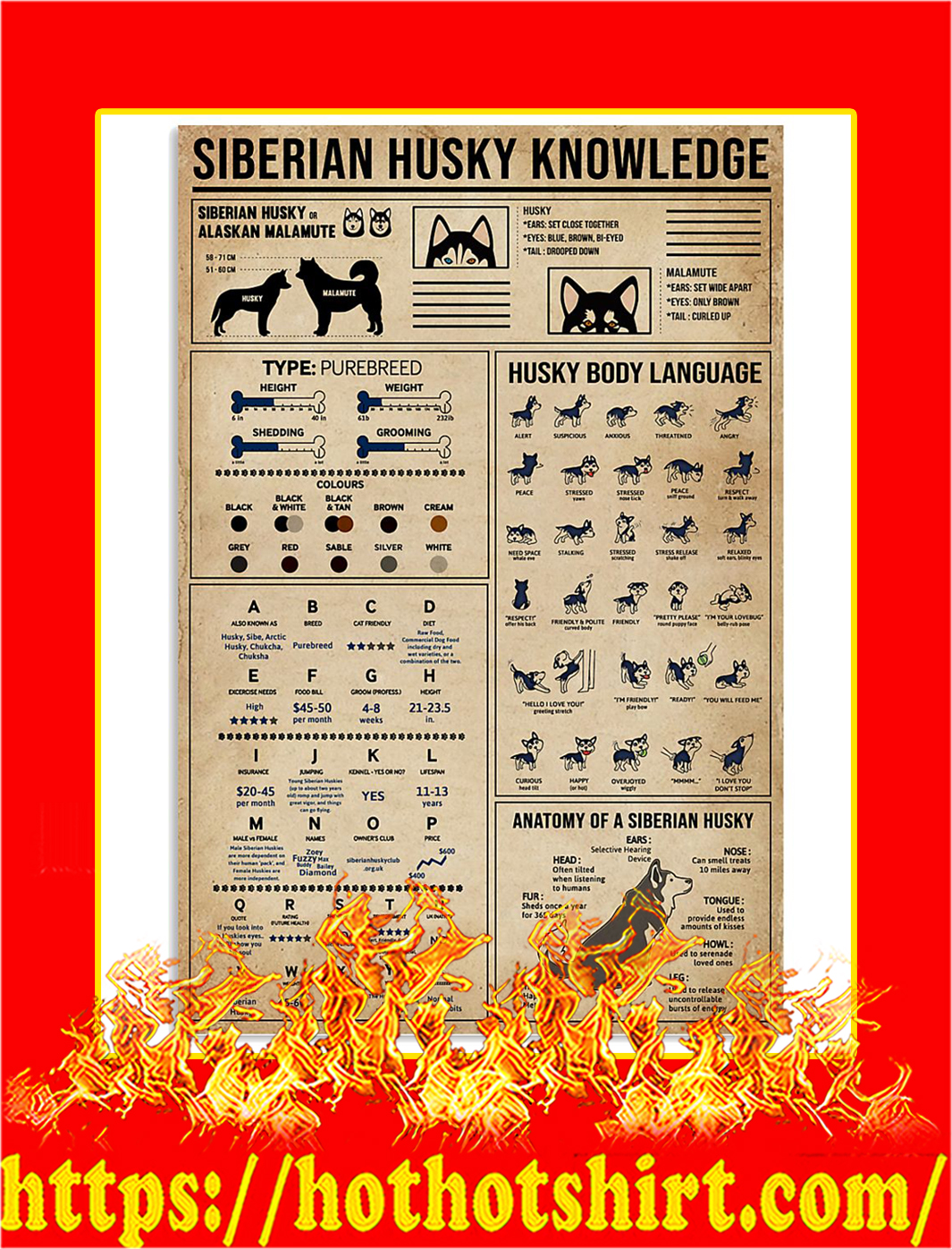Siberian Husky Knowledge Poster