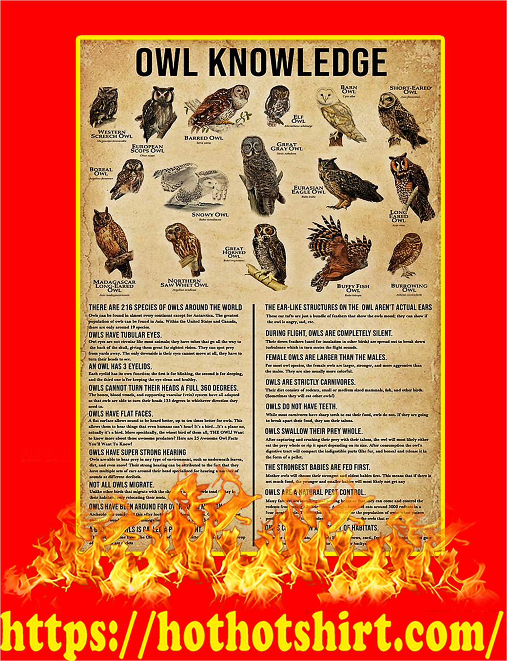 Owl Knowledge Poster - A3