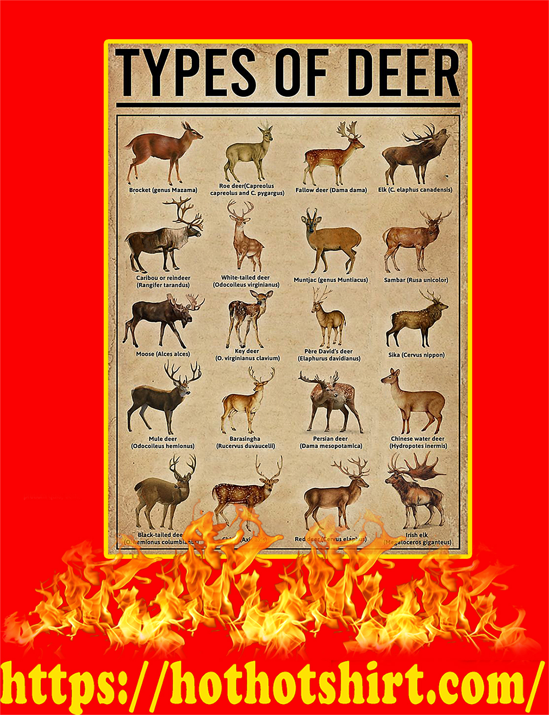 Types Of Deer Poster - A4