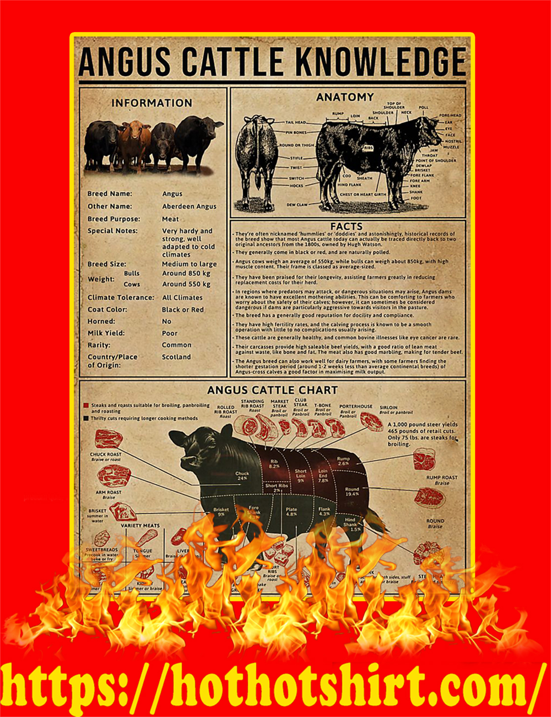 Angus Cattle Knowledge Poster - A2