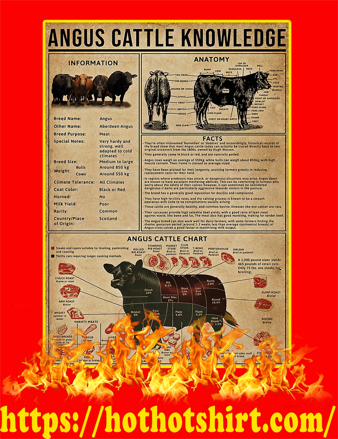Angus Cattle Knowledge Poster - A4