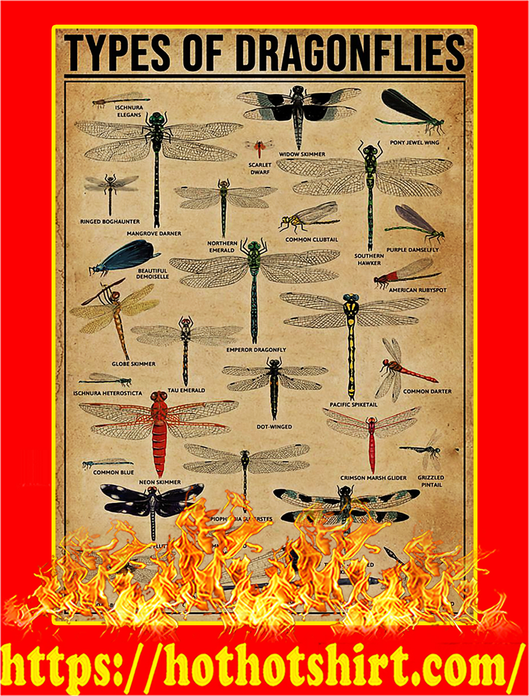 Types Of Dragonflies Poster - A2