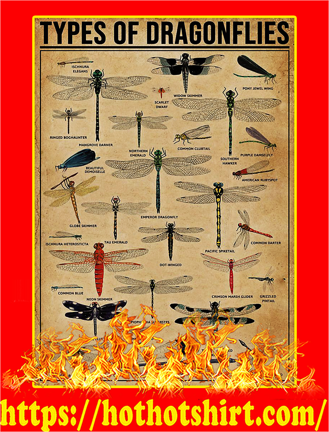 Types Of Dragonflies Poster - A3