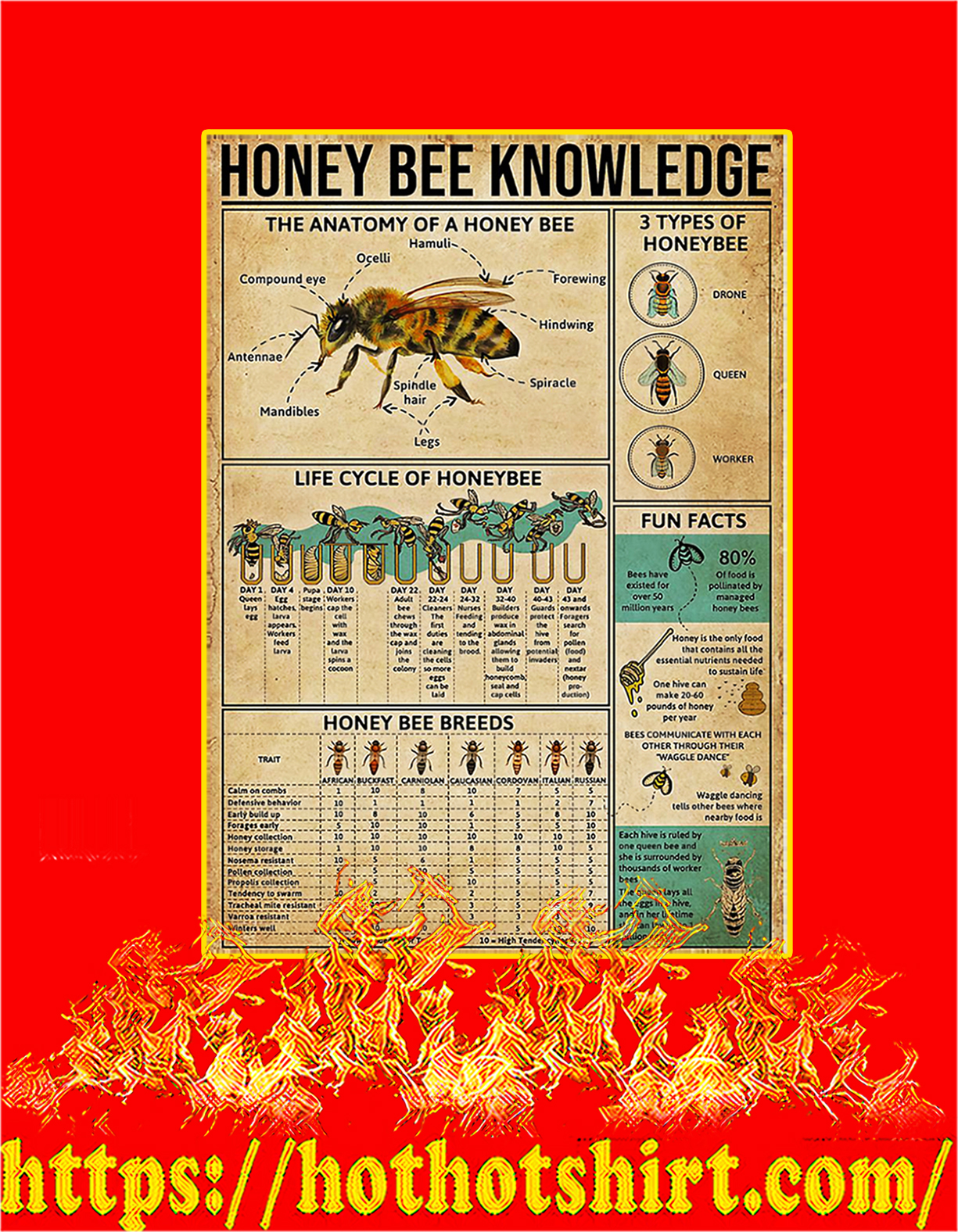 Honey bee knowledge poster - A4
