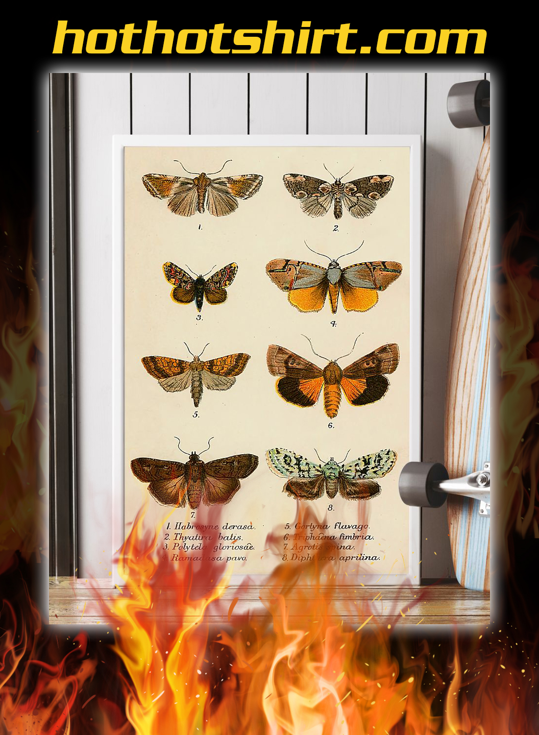 Butterfly types poster 2