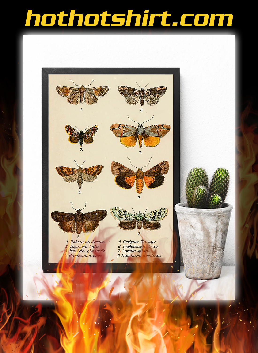 Butterfly types poster 3