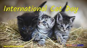 International Cat Day 2021